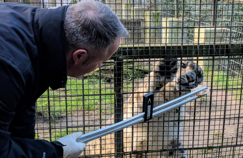 Welsh Mountain Zoo to reopen next month